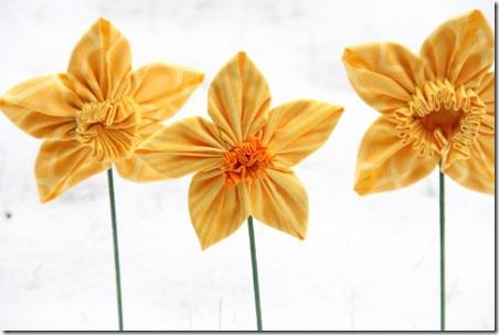 daffodil 23
