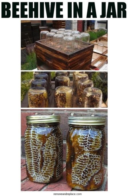 Beehive in a Jar from Remove and Replace