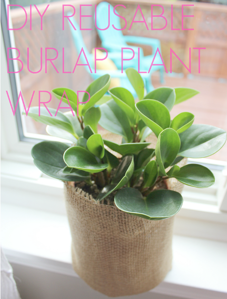 http://craftystaci.files.wordpress.com/2015/08/reusable-burlap-plant-wrap-from-white-house-crafts.png?w=448&h=589