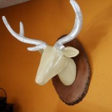Deer-Head-with-Homemade-Wood-Stain_thumb.jpg